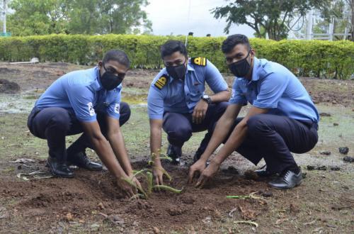 plantation at NAVY