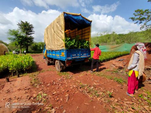 transport service for supply of trees